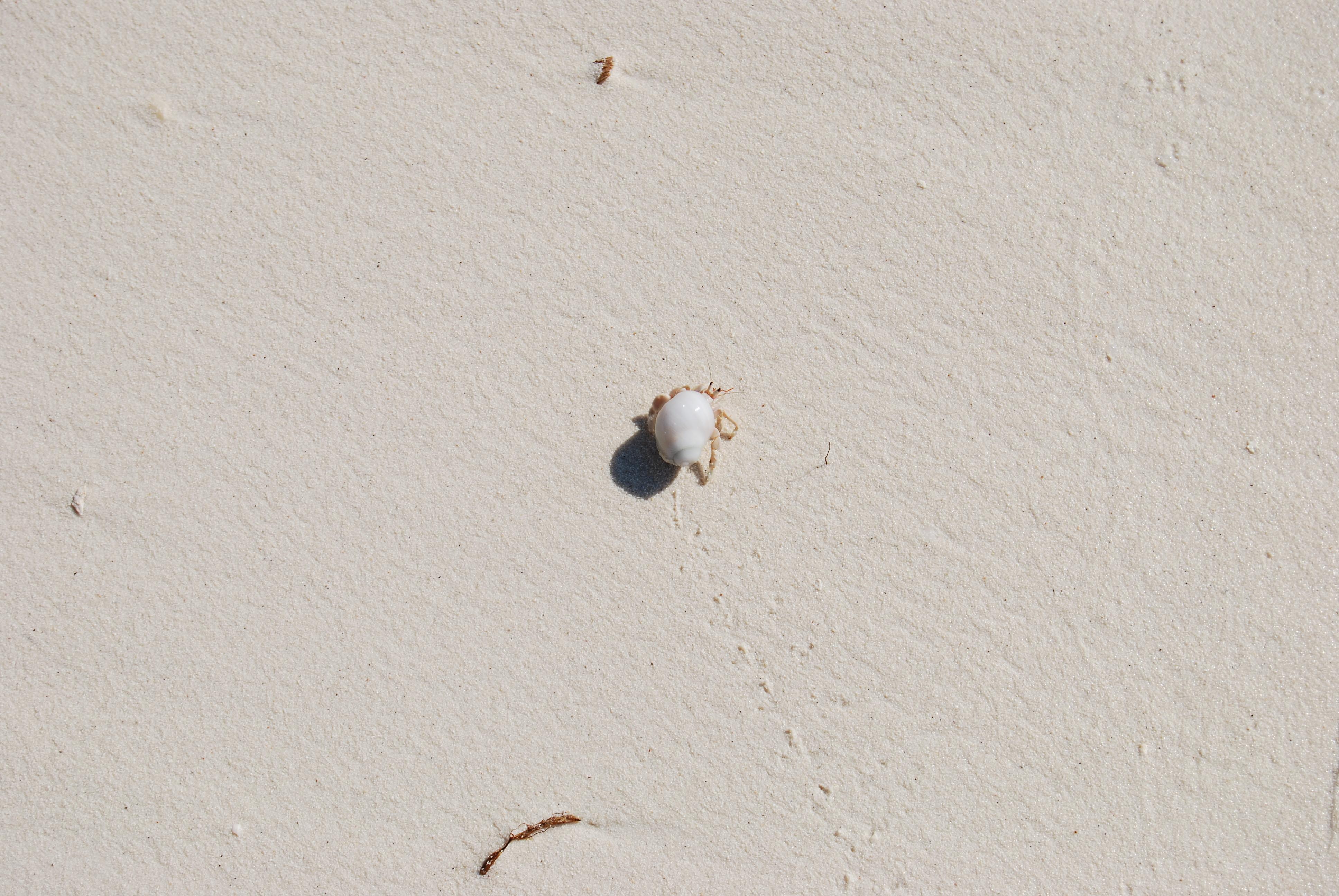 Einsiedlerkrebs auf den Malediven