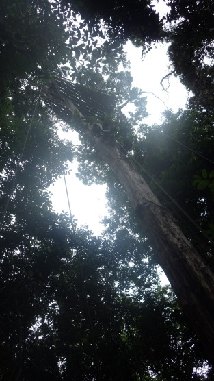 Rope-climbing to the canopy above