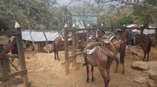Our mules had beaten us to our first campsite with the supplies