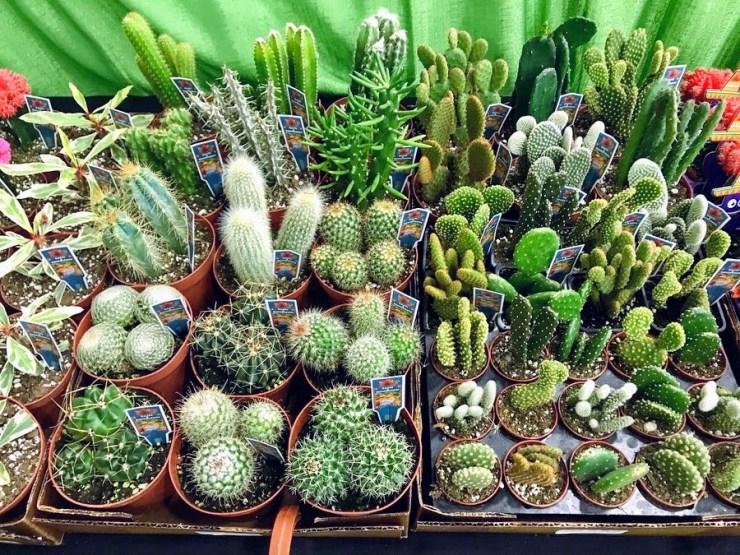 assorted cacti