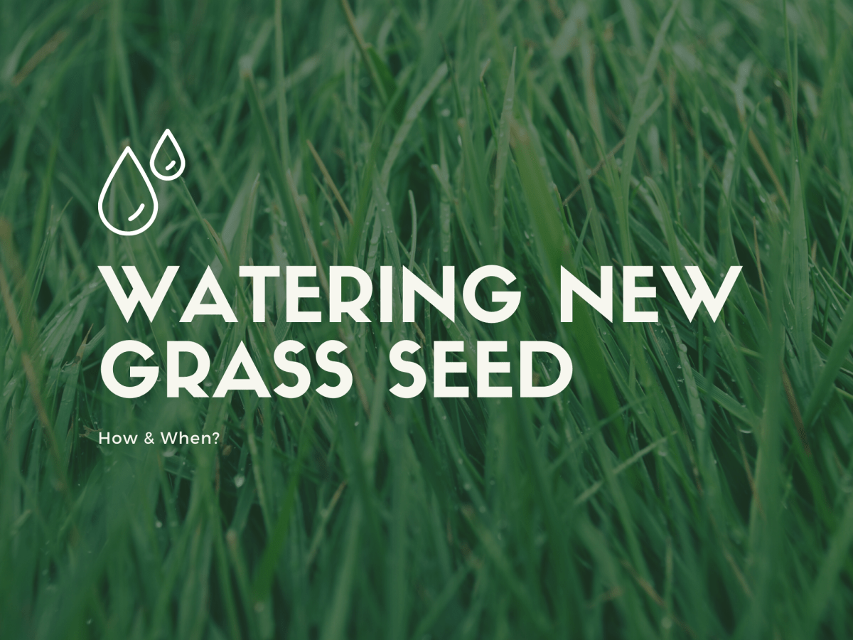 Watering New Grass Seed
