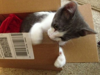 Boxes also make great chew toys