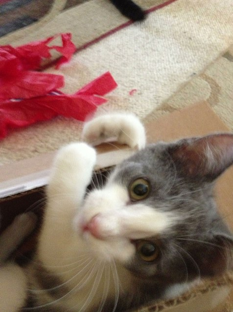 Merlin approves!