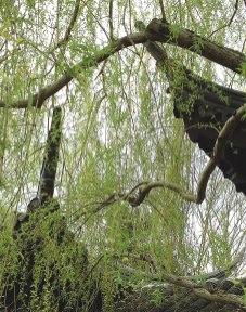 chinese-gardens13