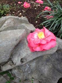 chinese-gardens26