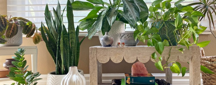 Home Staging with Plants Lots of Indoor Plants