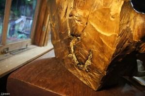 Elk skull encased in a tree
