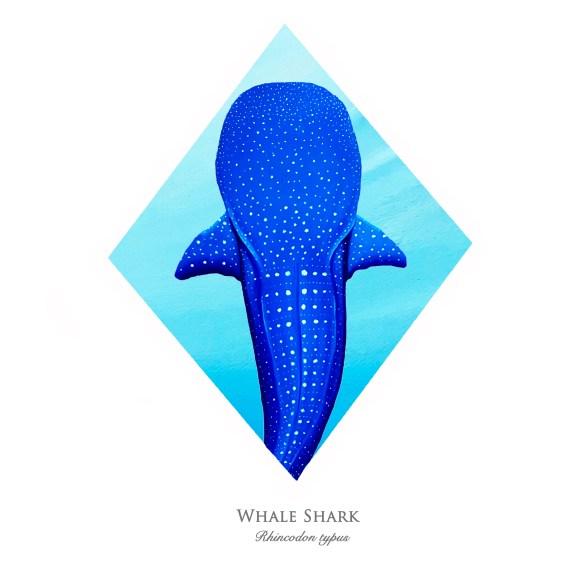 whalesharkprint