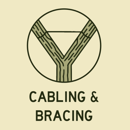 Cabling Trees