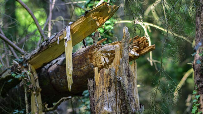 Tree and Shrub Removal - Dangerous Trees