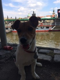 Prague with Jack Russell Charlie