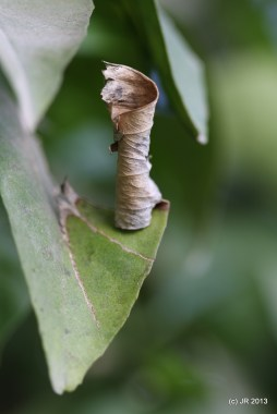 Twirly Leaf