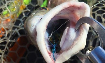 PAC Redfish Series