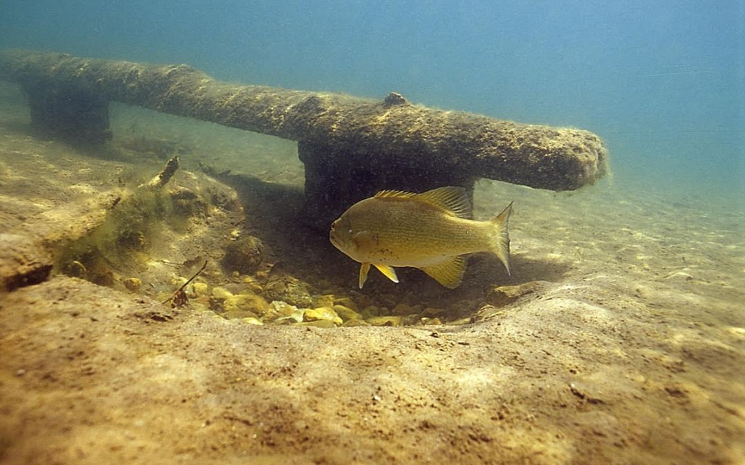 The Impact of Nest Fishing for Smallmouth Bass