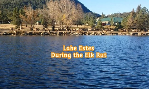 Fishing During The Elk Rut