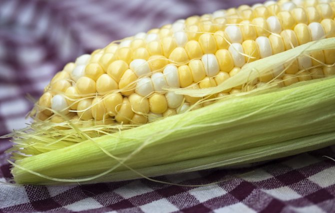 Monsanto is one Big Ag company breeding corn with genetically modified organisms.