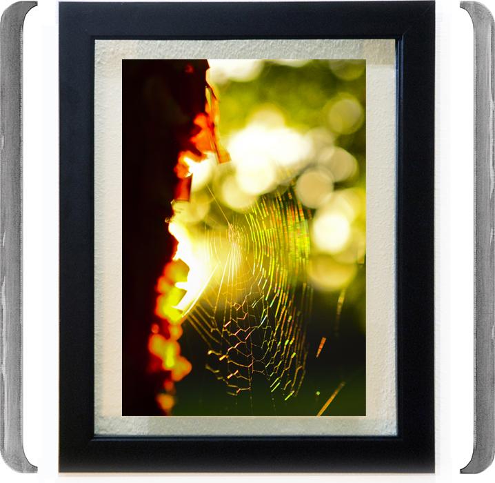TITLE: SUN CATCHER