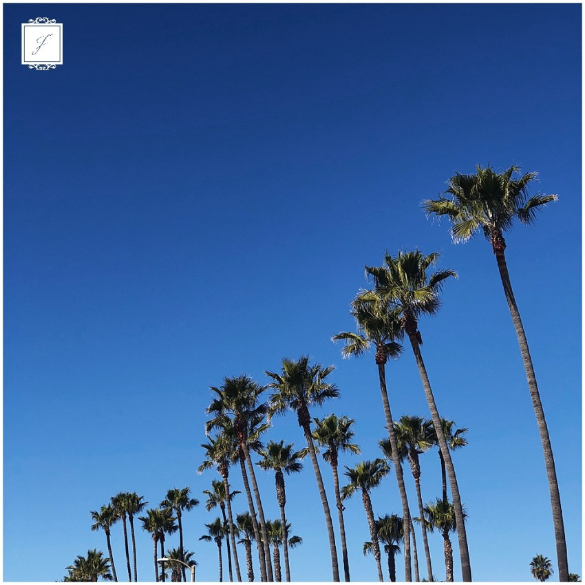 The Jacksons in real life California Adventure Trip. Jackson Signature Photography a travel, destination & elopement wedding photographer.