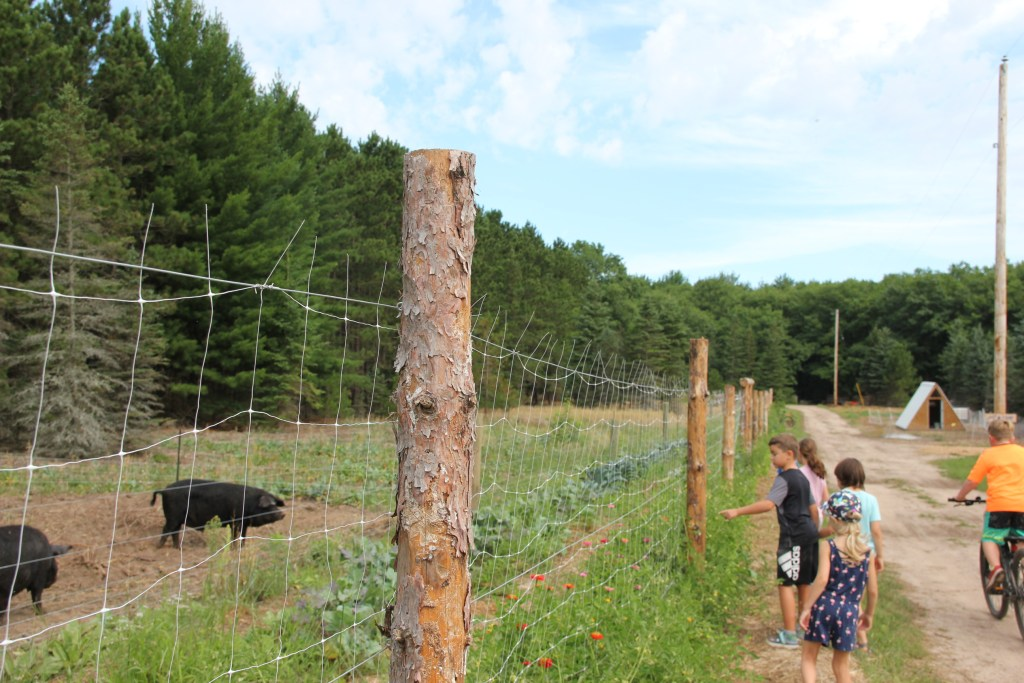 agritourism experience; kids touring the garden and livestock paddocks