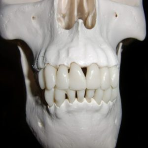 How Your Teeth Are Linked To Your Energy Meridians-skull