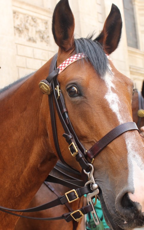 Lucy the Police Horse