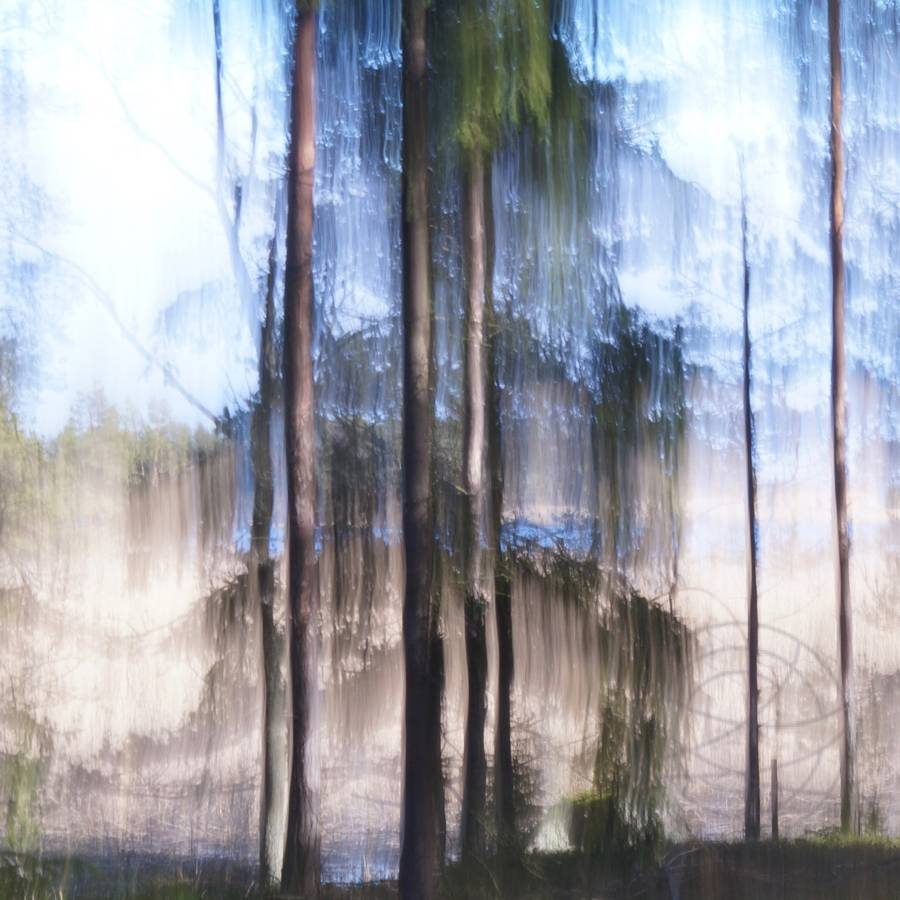 Crying Pine Tree (1) - Abstract realistic fine art forestscape photography by Jacob Berghoef