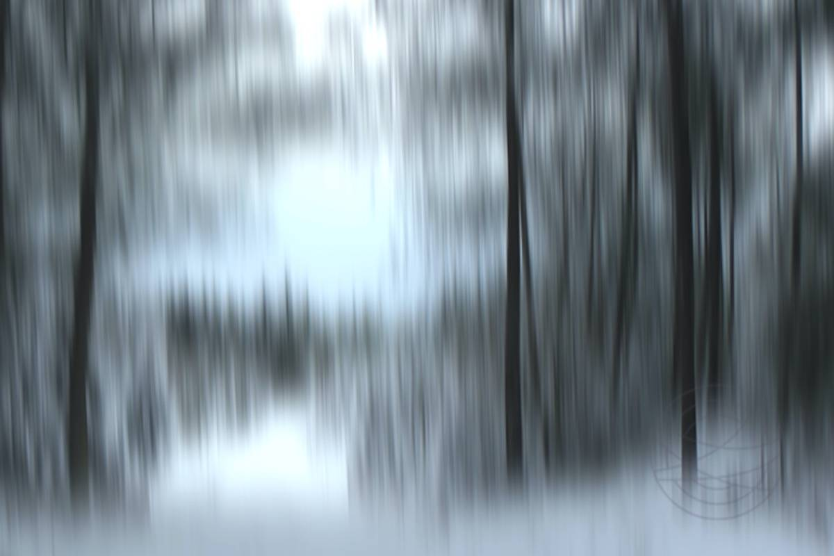 Drawing Shadows - Abstract realistic fine art forestscape photography by Jacob Berghoef