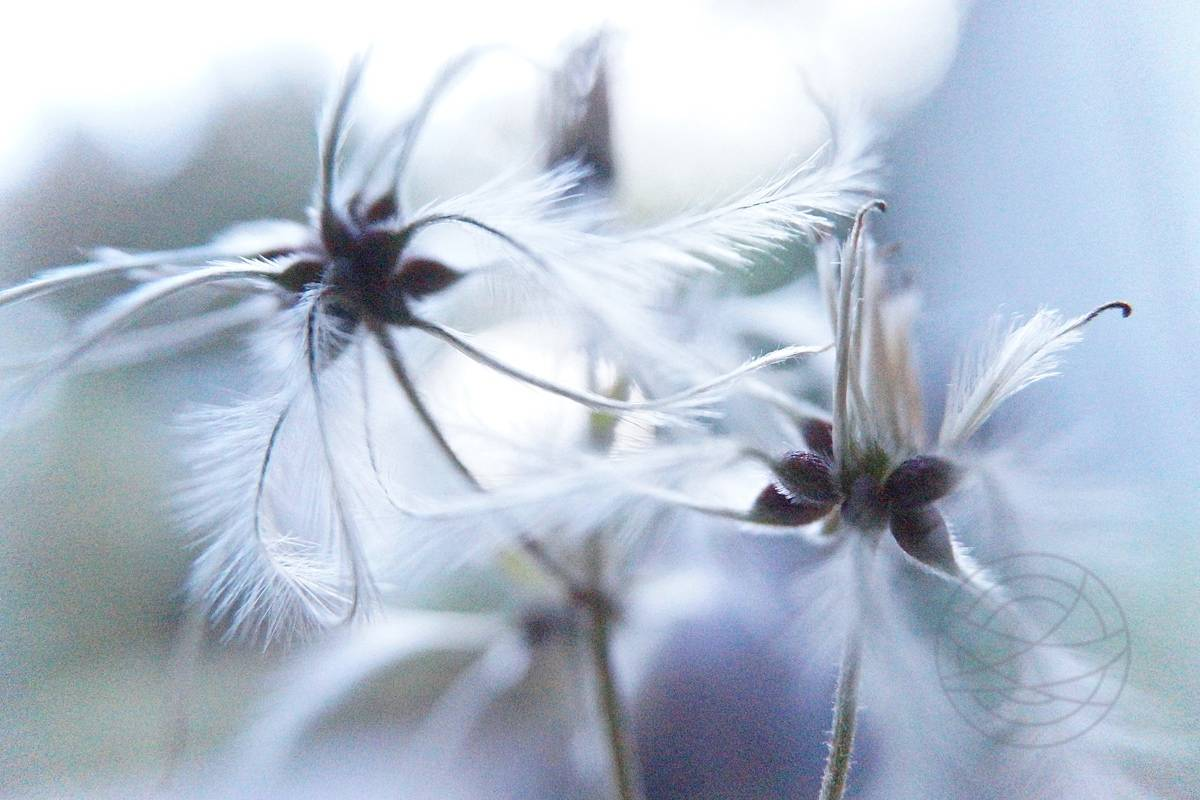 Fragile Awakening - Impressionistic fine art nature photography