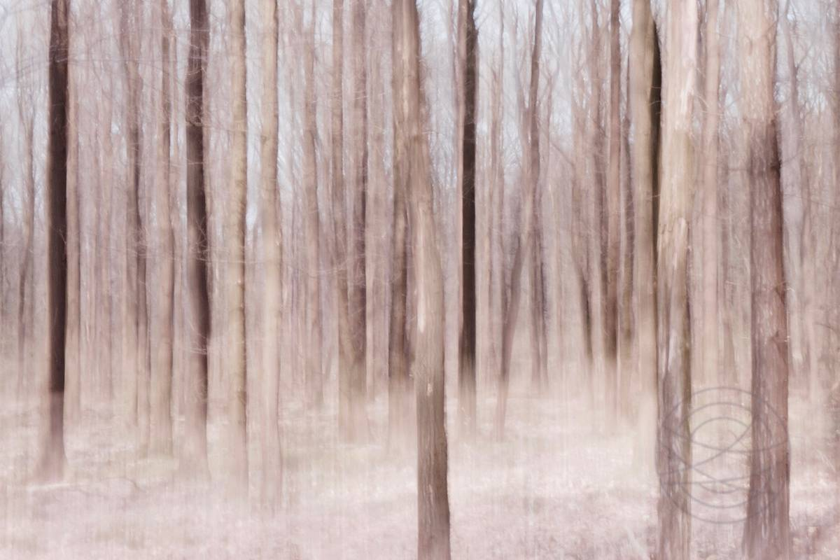 Gathering - Abstract realistic fine art forestscape photography by Jacob Berghoef