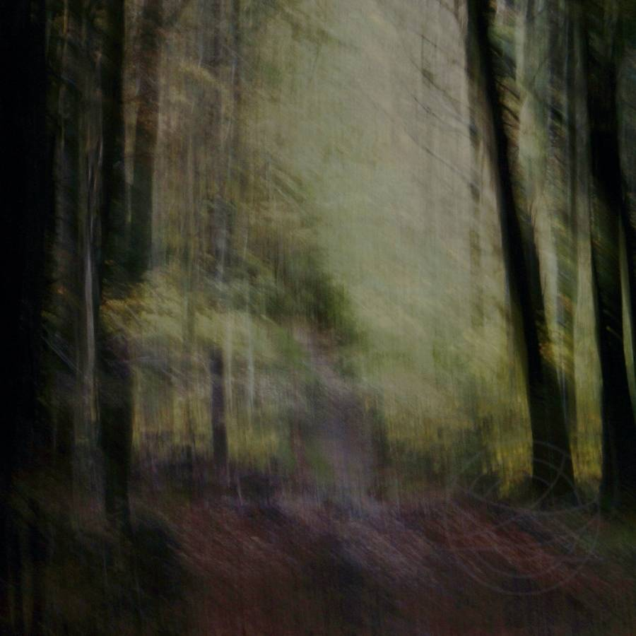 Into Autumn Light - Abstract realistic fine art forestscape photography by Jacob Berghoef