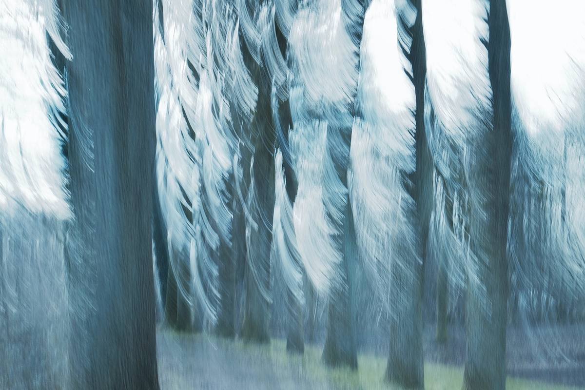 Silver Hair, Ragged Shirt And Baggy Pants - Abstract realistic fine art forestscape photography by Jacob Berghoef