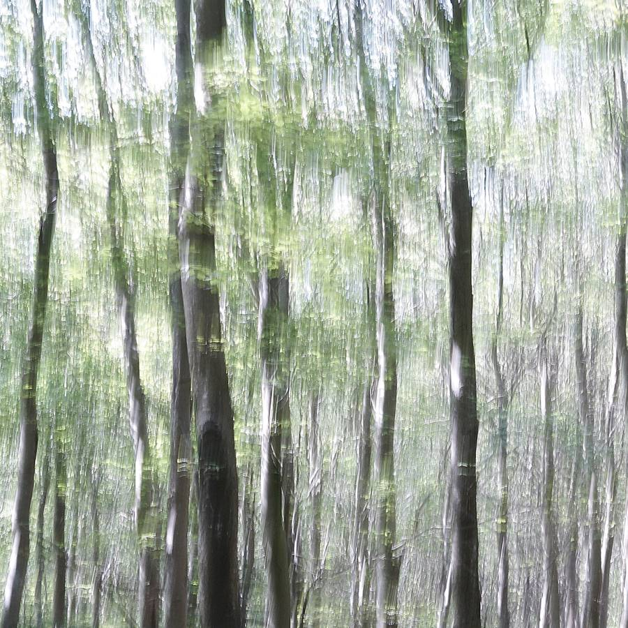 Thousand Leaves - Abstract realistic fine art forestscape photography by Jacob Berghoef