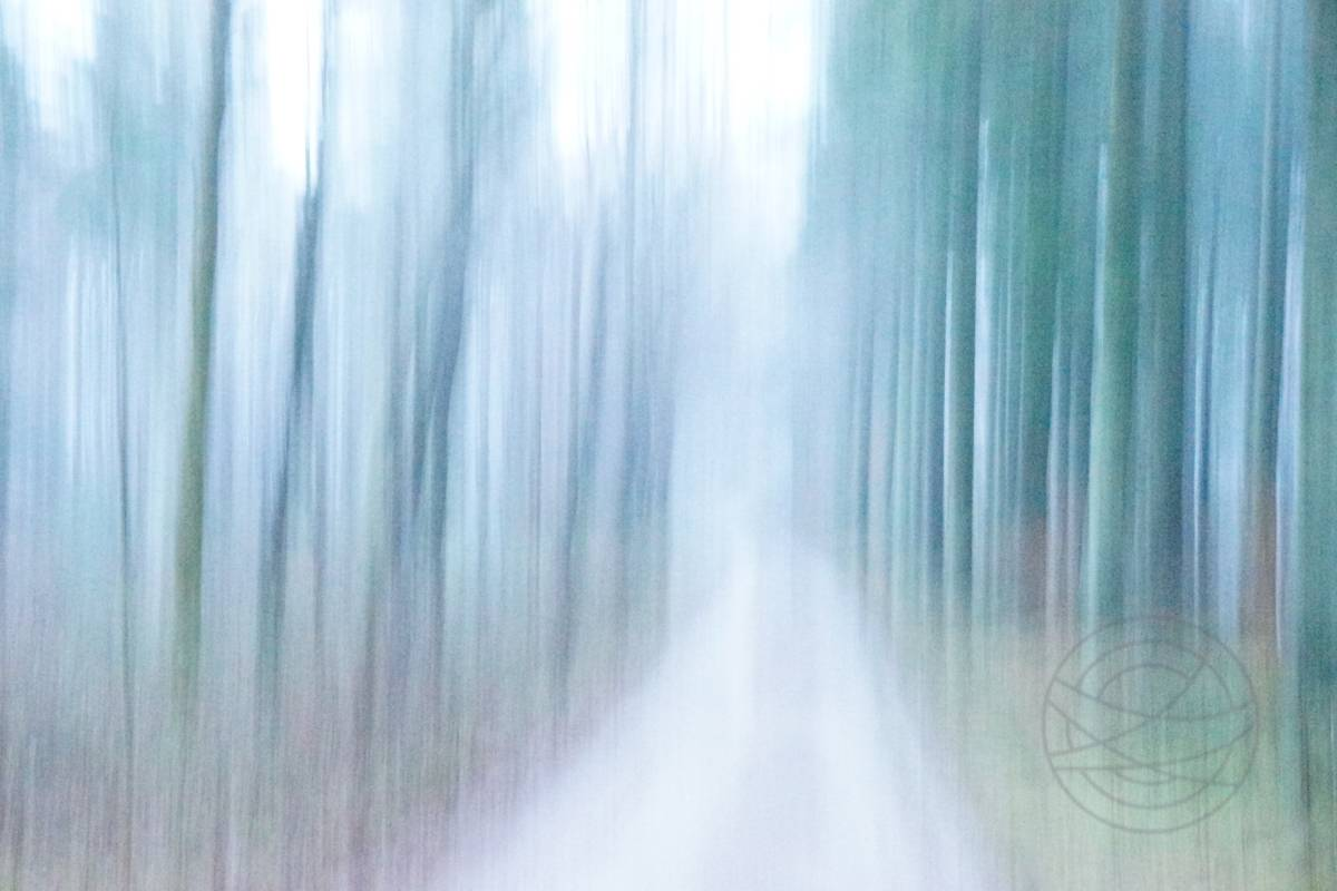 Weeping Wind - Abstract realistic fine art forestscape photography by Jacob Berghoef