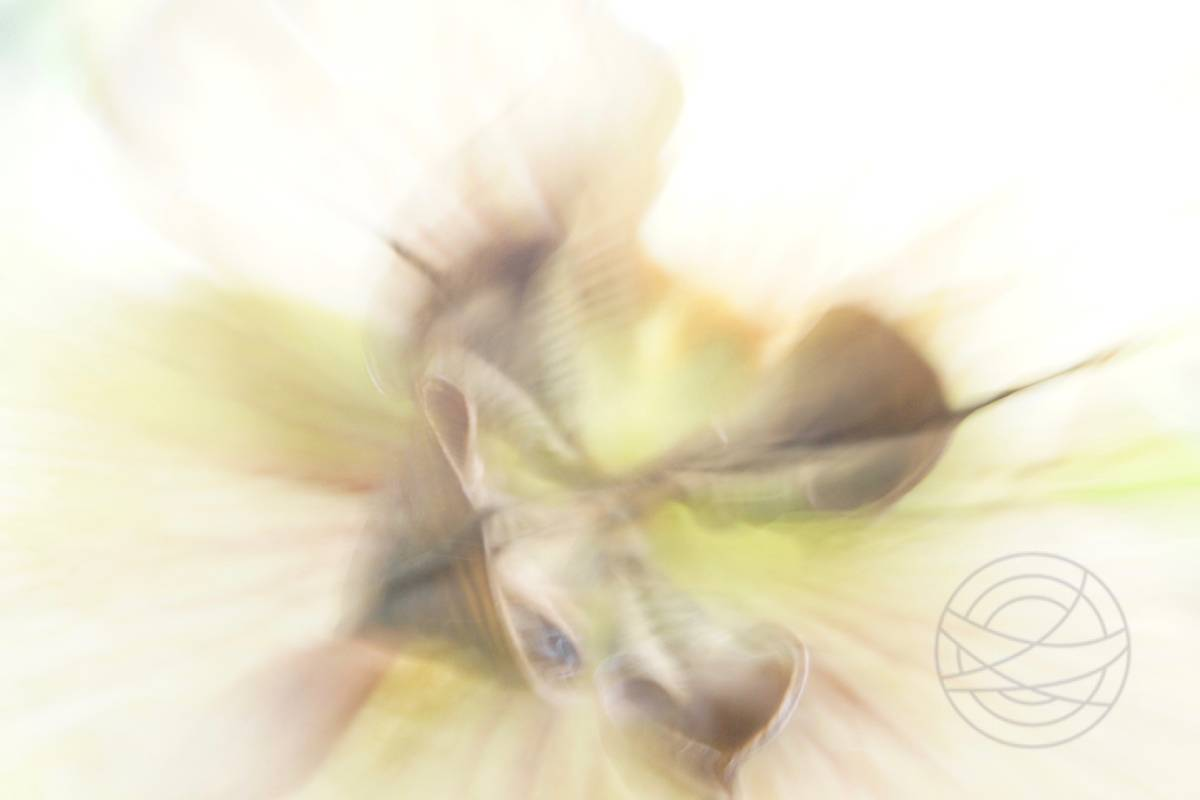 Withered (1) - Abstract realistic fine art nature photography