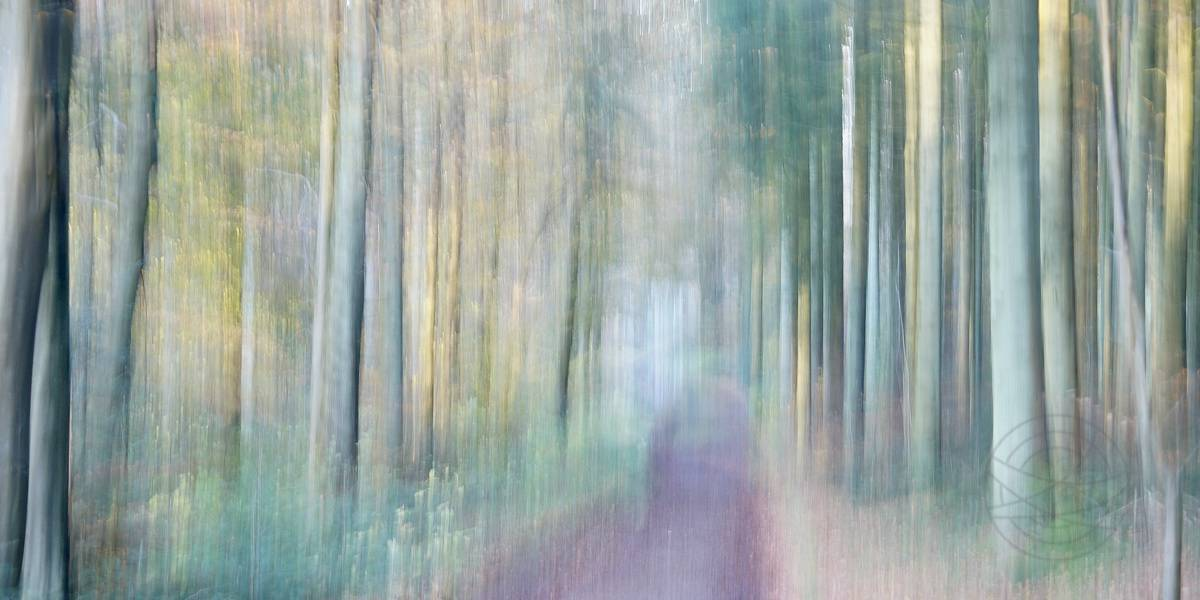 Voices Of The Trees - Impressionistic fine art forestscape photography by Jacob Berghoef