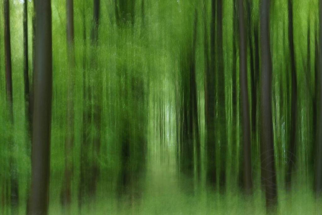 Green Song - Impressionistic fine art forestscape photography