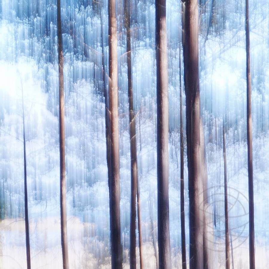 Dawn - Early on a quiet, sunny winter morning. During a walk we arrived at the edge of a pine forest. A light blue dawn is the start of a beautiful day… - Modern impressionistic fine art landscape photography by Jacob Berghoef