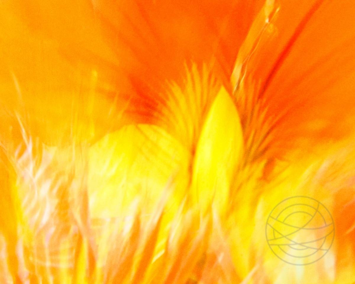 Summer Flames - The inside of a flower of a nasturtium (Tropaeolum majus), illuminated by bright sunlight. - Abstract realistic fine art nature photography by Jacob Berghoef