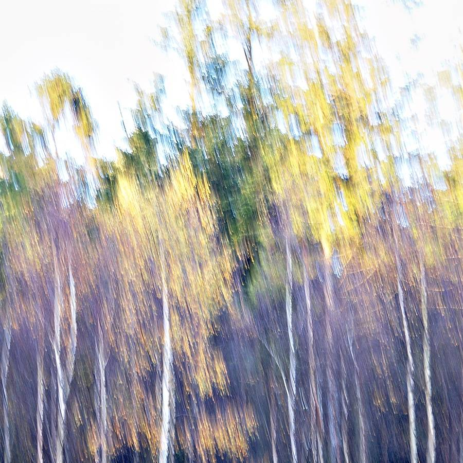 Dripping Leaves - A beautiful autumn evening. I am sitting at the edge of a clearing in the woods. A light breeze takes the falling leaves, to nowhere.... - Impressionistic fine art nature photography by Jacob Berghoef