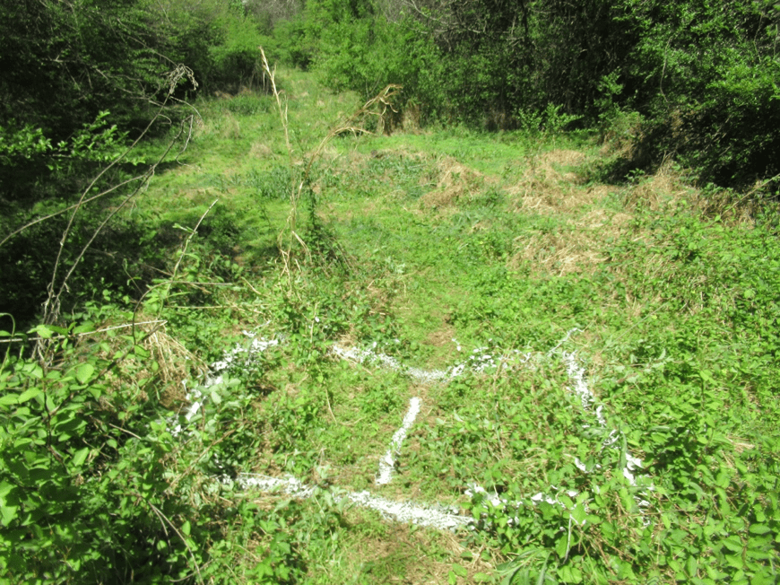 One of four graves southwest of TH's grave, west of the vegetation line