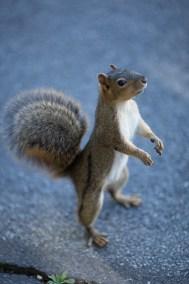 CalSquirrels participant