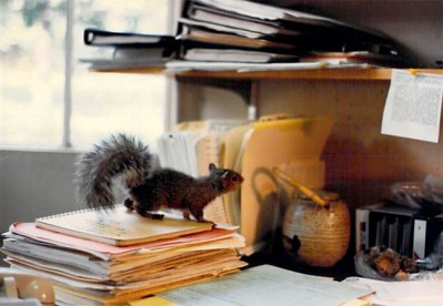 Juvenile squirrel, Princeton 1986