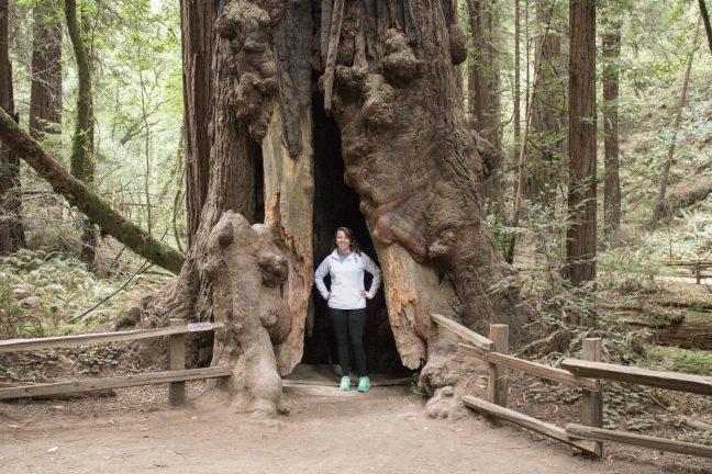 Giant Redwoods in Muir Woods