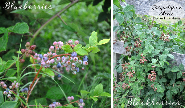 BlueberriesBlackberries-Jacquelynne Steves