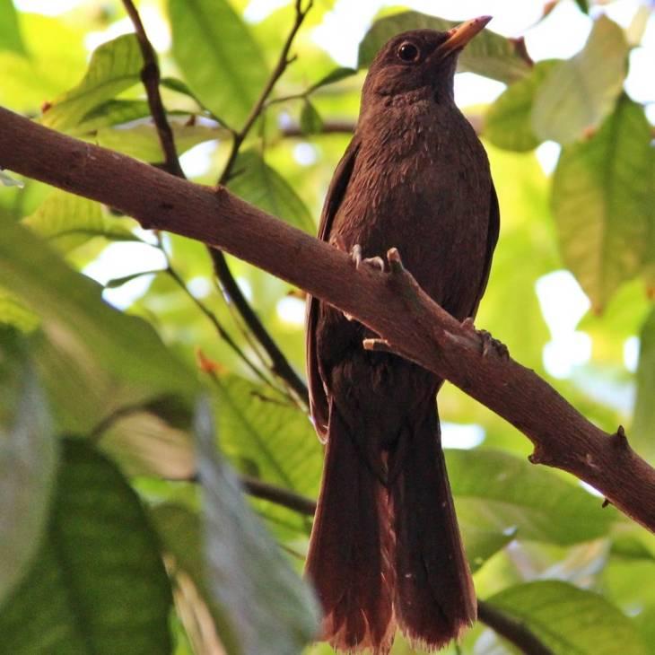 Salut l'oiseau réveil chanteur