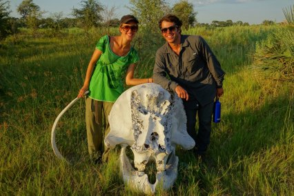 But we found only dead elephant