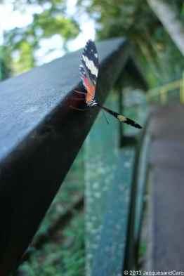 Iguacu Falls Bresil side
