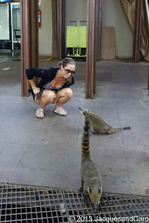 Caroline playing with the famous coatis