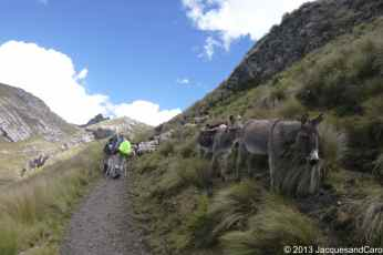 Road blocked by donkeys and sheeps