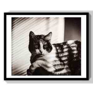 monochrome photos cinema cat art